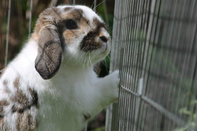 rabbit leaning on cage wall